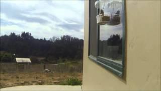 Blue Jay Feeding At A Window Bird Feeder
