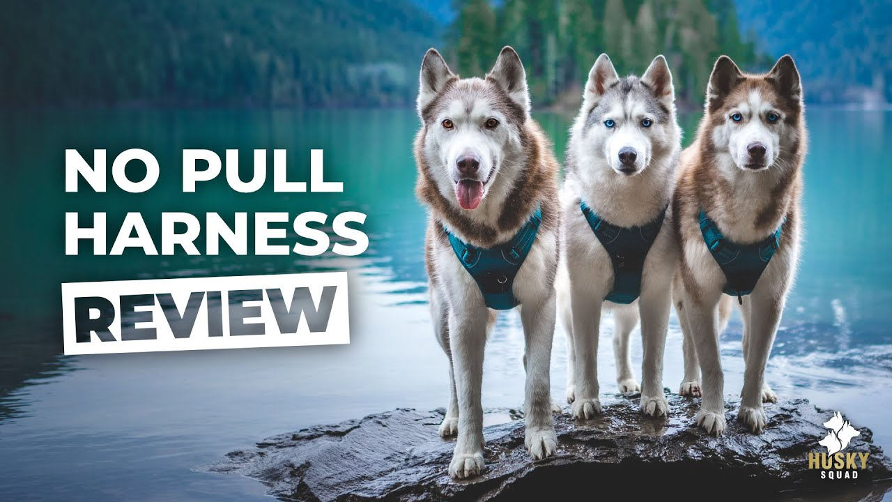 Dog Harness Review Husky Approved Youtube