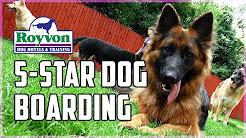 5 Star Dog Boarding in the UK