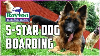 5 Star Dog Boarding In The Uk