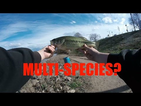 Multi Species Bass Fishing With Jake (Monongahela River, PA) GoPro