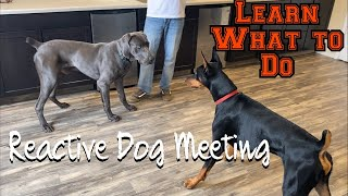 Learn how to let your reactive dog meet other dogs