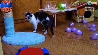 ВЛОГ Видео для детей Орбиз сюрпризы игрушки для Котенка - Ярослава и разноцветные шарики ORBEEZ