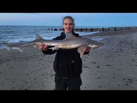 Smoothhound And Bass Fishing In North Norfolk May 2019