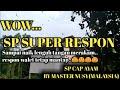 Suara Panggil Walet Gratis Yang Super Respon Sp Cap Ayam By Master Nusy Malaysia  Mp3 - Mp4 Download