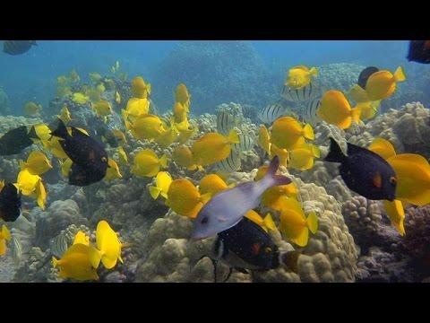 Nature: Hawaii's Kona Coast