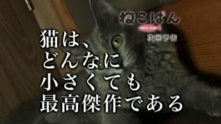 『ねこばん』第4回―猫は、どんなに小さくても最高傑作である。 2010年10...
