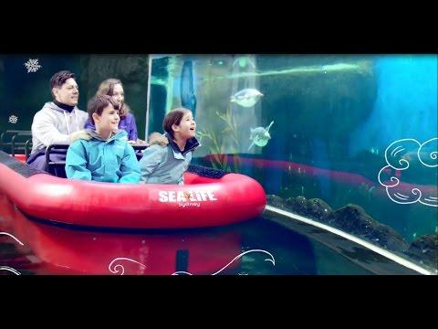 Experience The Ultimate Penguin Expedition At SEA LIFE Sydney Aquarium!