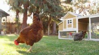 SummerHawk Ranch Chicken Coop Design