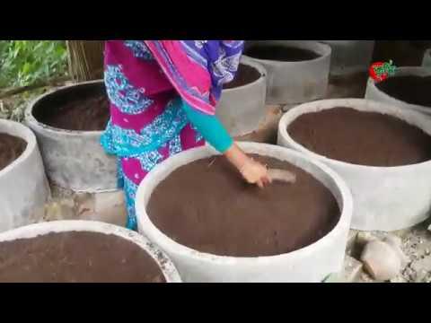 কেঁচো সার (vermi compost)- ৫ হাজার টাকা দিয়ে শুরু করে মাসিক ১৫ হাজার টাকা আয়-কৃষানী জাহানারা