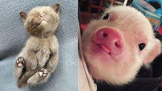 Funny Baby Animals Videos Compilation - Funny Moments
