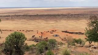 Moment, w którym odebrało mowę z wrażenia - Tsavo East National Park - Kenia - Afryka