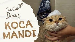 Koca Kucing yang Suka Berendam di Bathtub - Cia Cat Diary - Ep 35