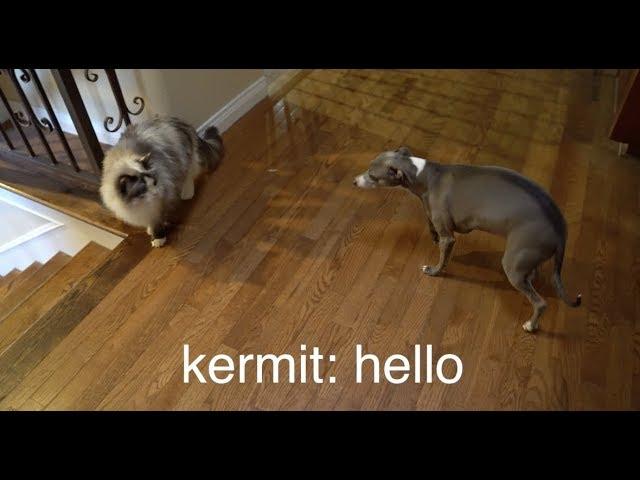 my-dogs-meet-a-cat