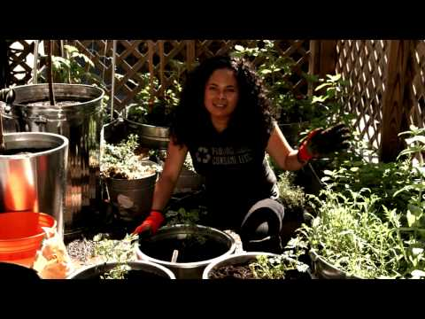 Container Gardening with Grape Vines
