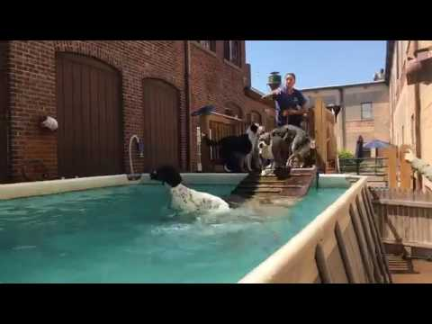 SWIMMING! | Solid K9 Training Dog Training