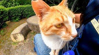 公園のテーブルに野良猫がいたのでナデナデしたら喜んで膝の上に乗ってきた