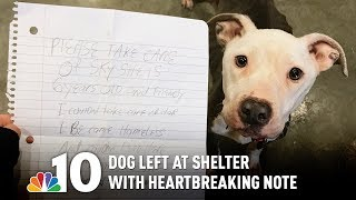 Hungry Dog Left at Animal Shelter With Heartbreaking Note