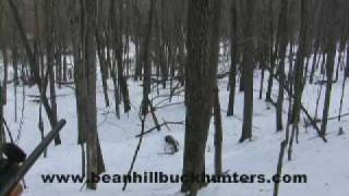 Eastern Coyote Hunting in Upstate New York: Nick's Christmas Eve hunt
