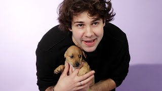 Download David Dobrik Plays With Puppies While Answering Fan Questions Mp3 and Videos