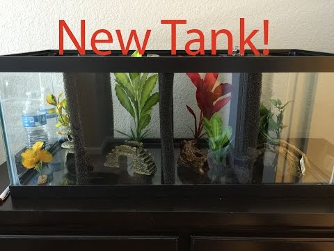 20 Gallon Divided Betta Tank