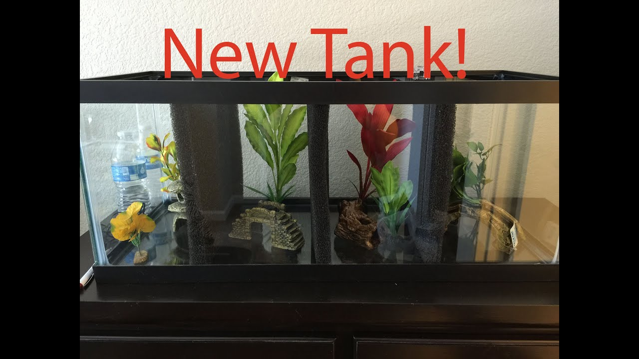 20 gallon divided betta tank youtube for How many fish in a 20 gallon tank