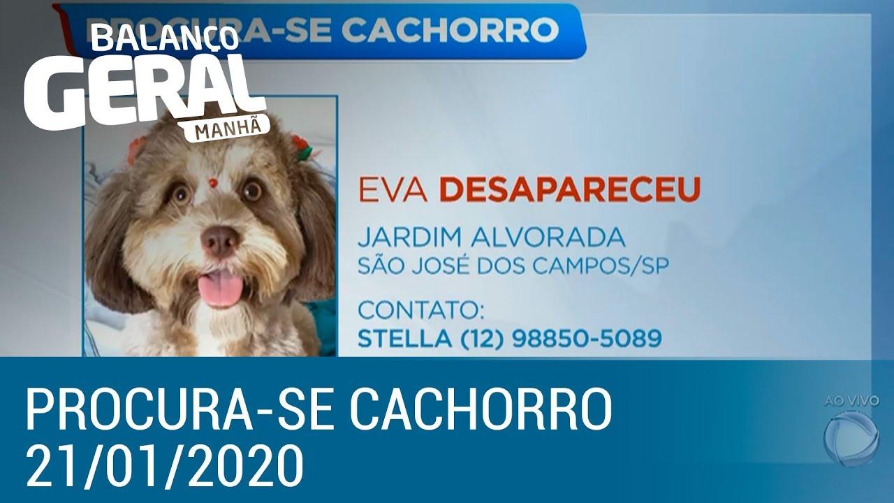 Procura-se Cachorro: veja os animais achados e perdidos do dia 21 de janeiro