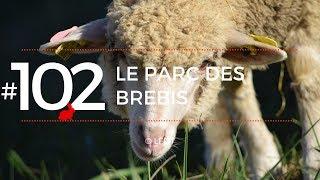 LE PARC DES BREBIS │LFDT #102