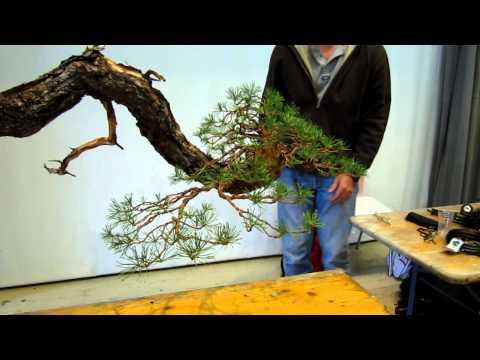 Bonsai Autumn Demo Trees