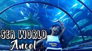 Aquarium Raksasa Bawah Laut | Sea World Ancol