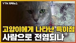 [자막뉴스] 中 우한에서 고양이 검사하자...15%에게 나온 특이점 / YTN