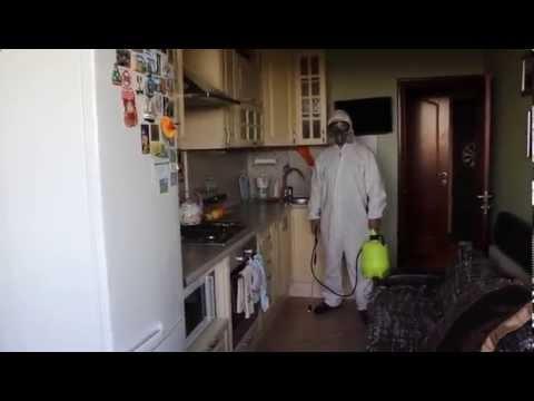 Дезинсекция_насекомых - Как_избавиться_быстро_от_тараканов