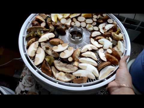 Как правильно сушить грибы в сушилке