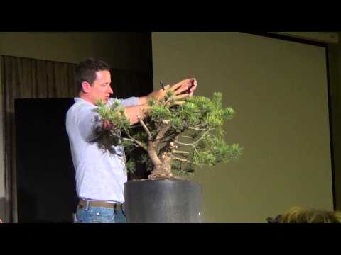 2013 AABC Convention in Canberra - Ryan Neil Scots Pine Demonstration