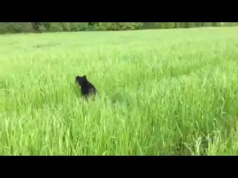 Happy dog jumping in grass
