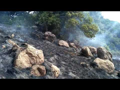 Velliangiri hills fired on 25-02-2017