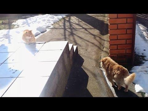 Neighbor's Dog Visiting My Cat