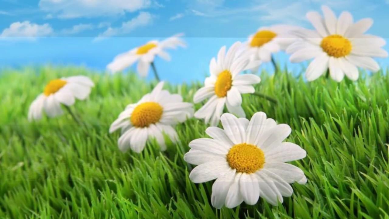 4d75267f24a32c Laat ons een bloem - Marc Tompson - YouTube