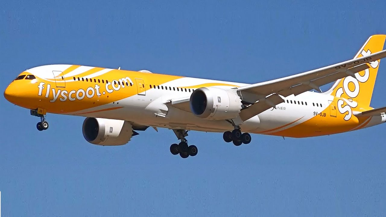 Image result for scoot airlines cargo
