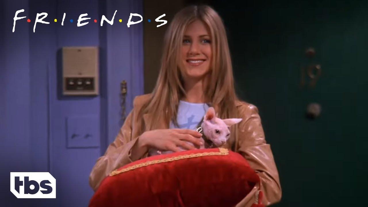 Friends: Rachel Buys An Expensive Naked Cat (Season 5 Clip)   TBS