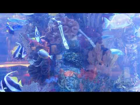 Aquarium at Rainforest Cafe in 4K | Grapevine Mills