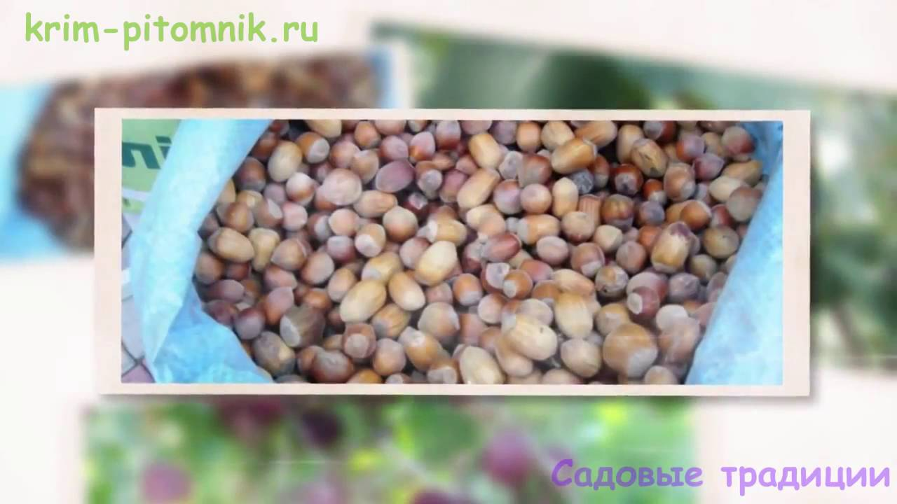Семена азимины после удаления из плодов очень быстро высыхают, уже. В украине 60-летние растения плодоносят в одесском ботаническом саду.