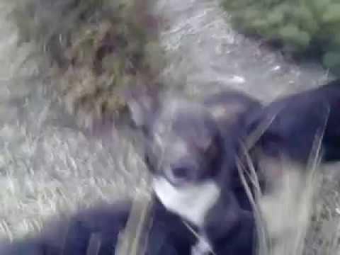 watch dogs prostituierte kamasutra 69
