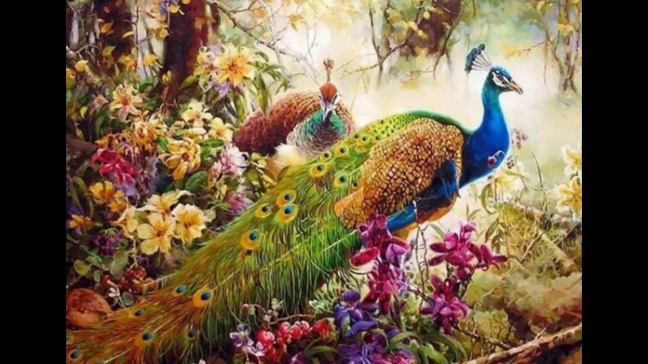 Peacock Birds Images Free Stock Photos Video Download Youtube