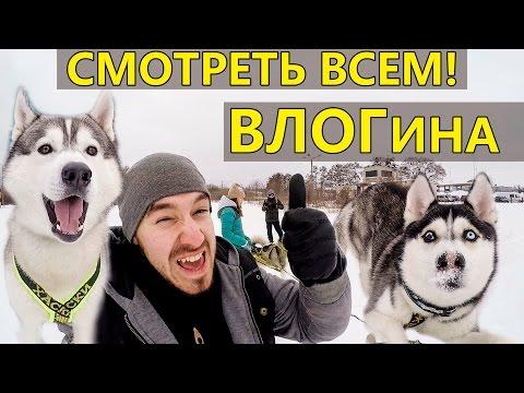 ВЛОГина: WINTER DOG FEST; Всё о хаски  и всё о собаках