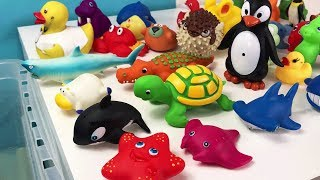 Funny Playing in Blue Water with Sea Animals Fun For Kids