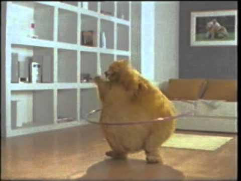 เมืองไทยประกันชีวิต - หมาอ้วน