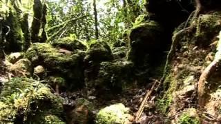 BBC Natural History Expedition Borneo Epi 1