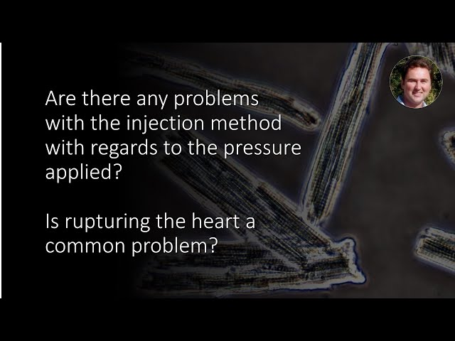 When using the Injection method of cardiomyocyte isolation, is rupturing the heart a common problem?