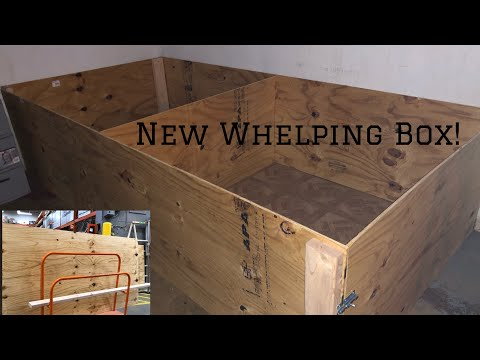 BUILDING A WHELPING BOX FOR MY AMERICAN BULLY PUPPIES
